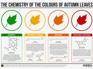 chemistryofleaves