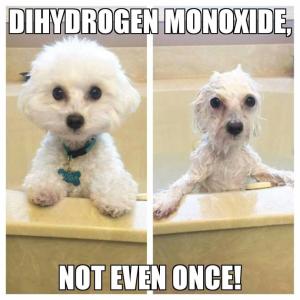 DihydrogenMonoxide11